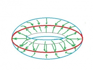 Collapse of torus onto its equator
